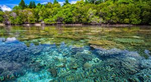Coral Reef - Sustainable